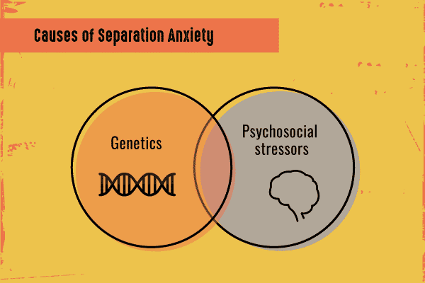 causes of separation anxiety infographic